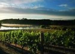 На каком расстоянии сажать виноград