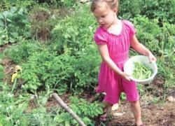 Выращиваем горох весь сезон