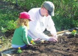 Проверяем семена на всхожесть