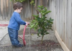Правила полива плодовых деревьев