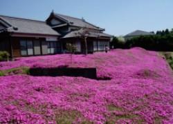 Ради любимой жены японец засадил цветами целый холм