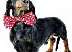 Самые «кусачие» породы собак