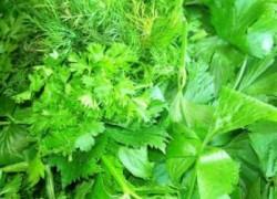 Выращиваем витамины на подоконнике
