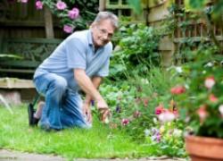 Какие ошибки были допущены садоводами этим летом