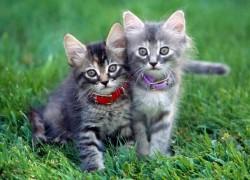 Ошейник для котенка