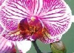 Сад для дикой орхидеи
