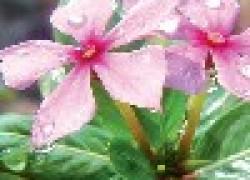 Скорая помощь для комнатных растений