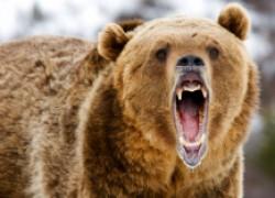 Печальные истории «общения» с медведем, взятые из жизни
