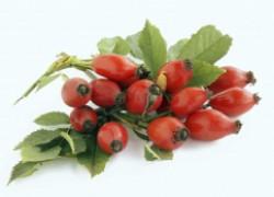 Секреты выращивания шиповника