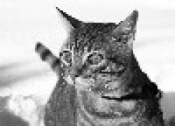 Чем болеют кошки