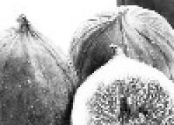 Инжир - вкусное лакомство