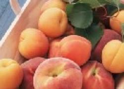 Почему осыпаются персики