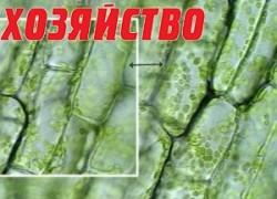 Есть ли стволовые клетки у растений