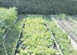 Почему овощи враждуют