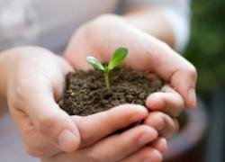 Сроки высадки семян