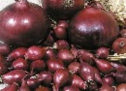 Убираем и готовим к хранению лук-севок