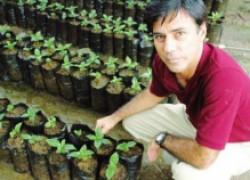 Выращиваем крепкую и здоровую рассаду