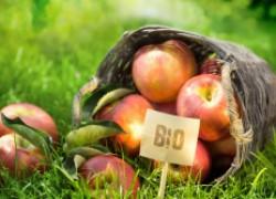 Какой биопрепарат купить для растений