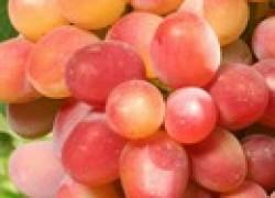 Виноград с сахаром