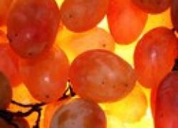 Популярный иностранный виноград