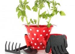 Подкормки ускоряют урожай