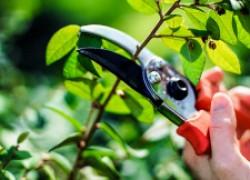 Ухаживание за садом
