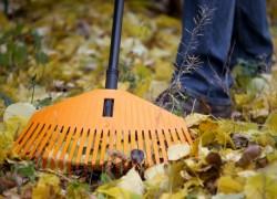 Осень: наводим порядок в цветнике