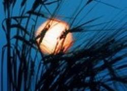 Несколько правил лунной «агрономии»