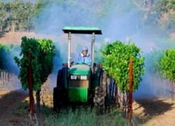 Бордоская жидкость на винограднике