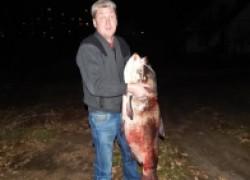 Белорус поймал толстолоба весом 27 кг