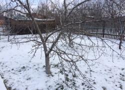 Как  я спасаю свой газон от снежной корки