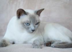 Четыре кошачьих «Почему»