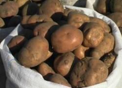 Как я храню картофель