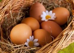 Проглистовали кур. Можно ли теперь есть их яйца?