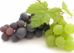 Три способа ускорить плодоношение винограда