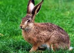 Охота на зайчишку