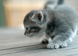 Как отучить котёнка царапаться