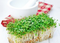 Кресс-салат - хорошая и полезная травка