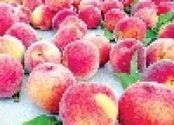 Почему персик выгоднее абрикоса