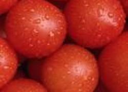 Пикировка томатов