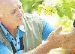 Заметки виноградарю-новичку