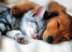 Четыре способа сохранить здоровье собаки и кошки