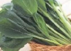 Секреты выращивания щавеля