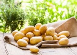 Как получить второй урожай картофеля