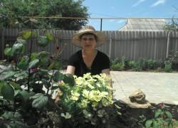 Эшшольция – цветы на память