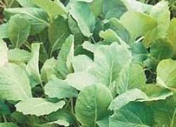 Памятка по выращиванию рассады
