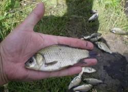 Картофельно-чесночное тесто для ловли рыбы