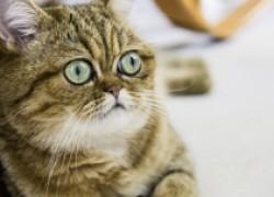 Пора кота везти на кастрацию
