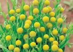Кому земляничной травы –  цефалофоры?