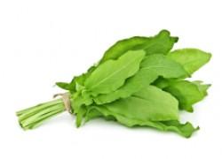 Щавель — ранняя зелень